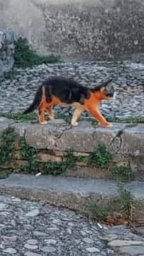 """""""A Terni un gatto è stato verniciato di rosso"""": la denuncia shock dell'Enpa"""