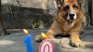 """Luca Bizzarri, gli auguri social per i dieci anni del suo cane: """"Mi hai insegnato che l'amore non ha bisogno di parole"""""""