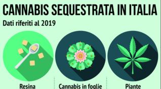 Cannabis sequestrata in Italia