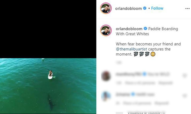 Guarda l'incontro tra Orlando Bloom e lo squalo bianco