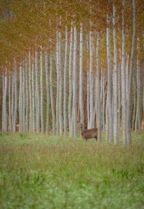 Le più belle foreste d'Italia: ecco le foto
