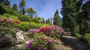 Cinque magnifici giardini botanici in Svizzera