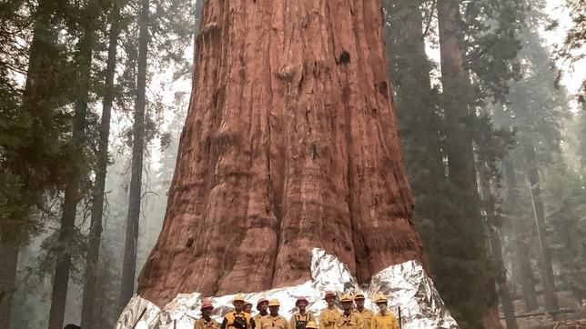 California, incendio minaccia l'albero più grande del mondo