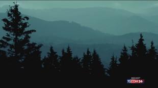 In Italia boschi aumentati di 587mila ettari