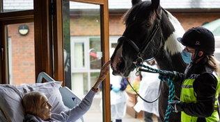 Inghilterra, dice addio al suo cavallo e ai cani dal letto dell'hospice