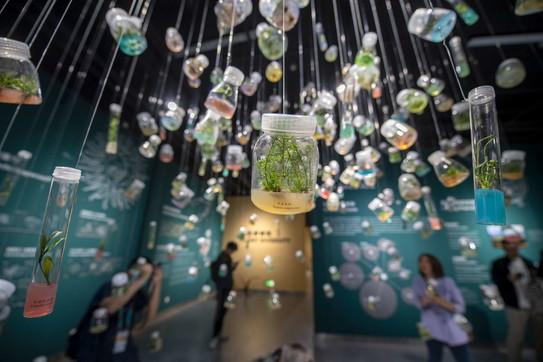 Cina, il primo museo dei semi al Fuligong Biodiversity Experience Park