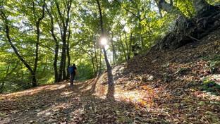 Toscana magica: nei boschi, tra castagne e meraviglie