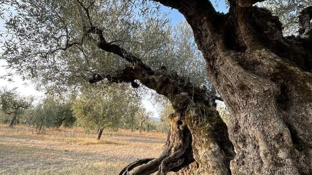 Un mese con l'olio extravergine dell'Umbria